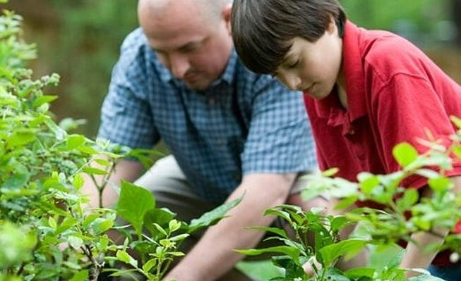 Photo of man and boy planting vegetables